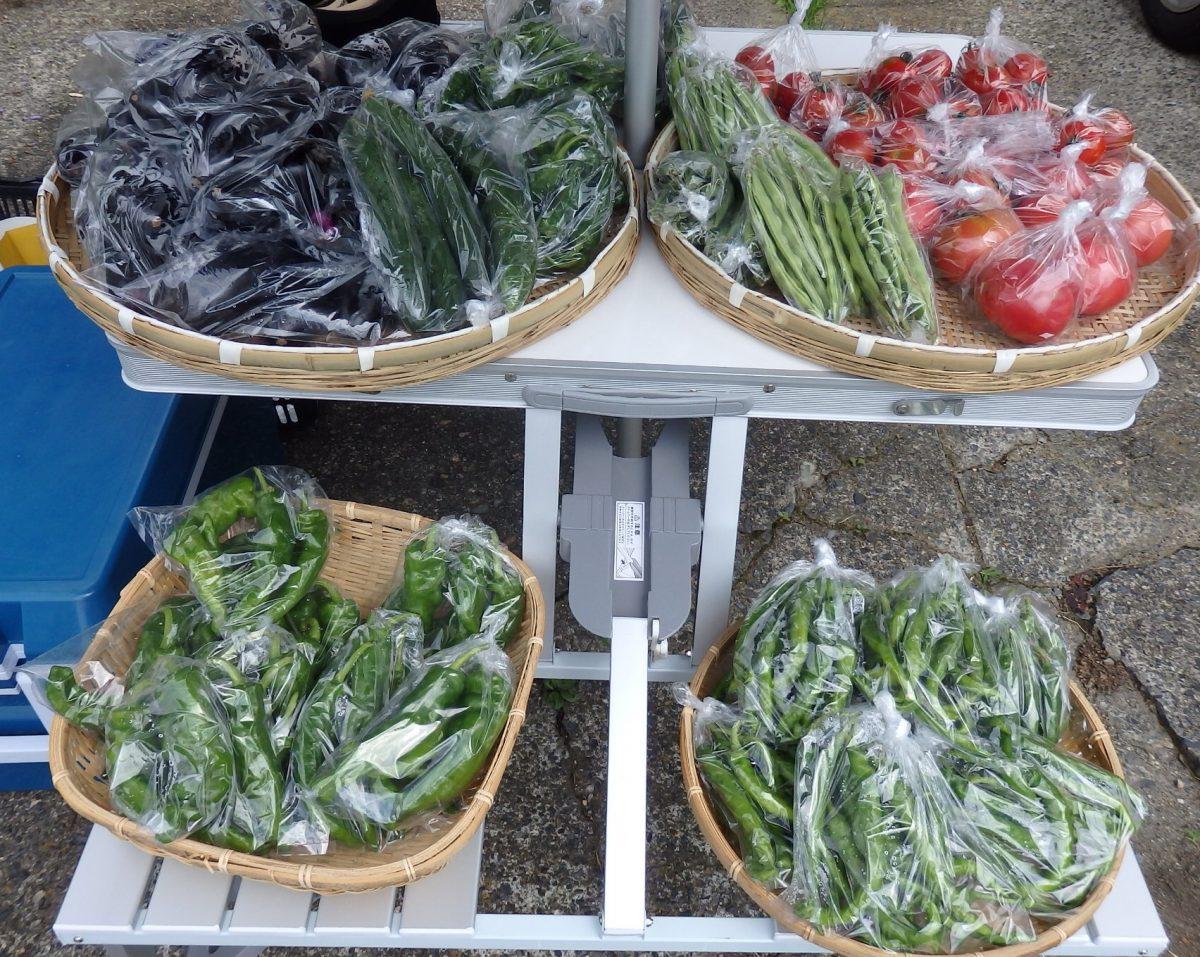 野菜創りにチャレンジ