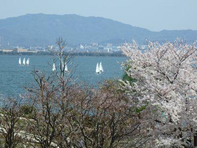 桜満開、楽しさ引き寄せ