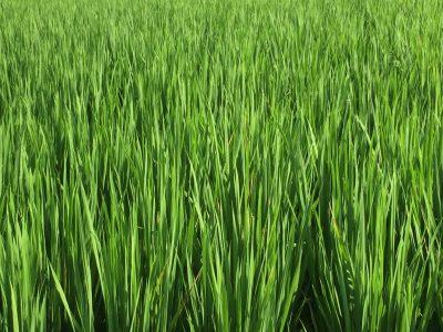 農業へ個人の力で援農隊