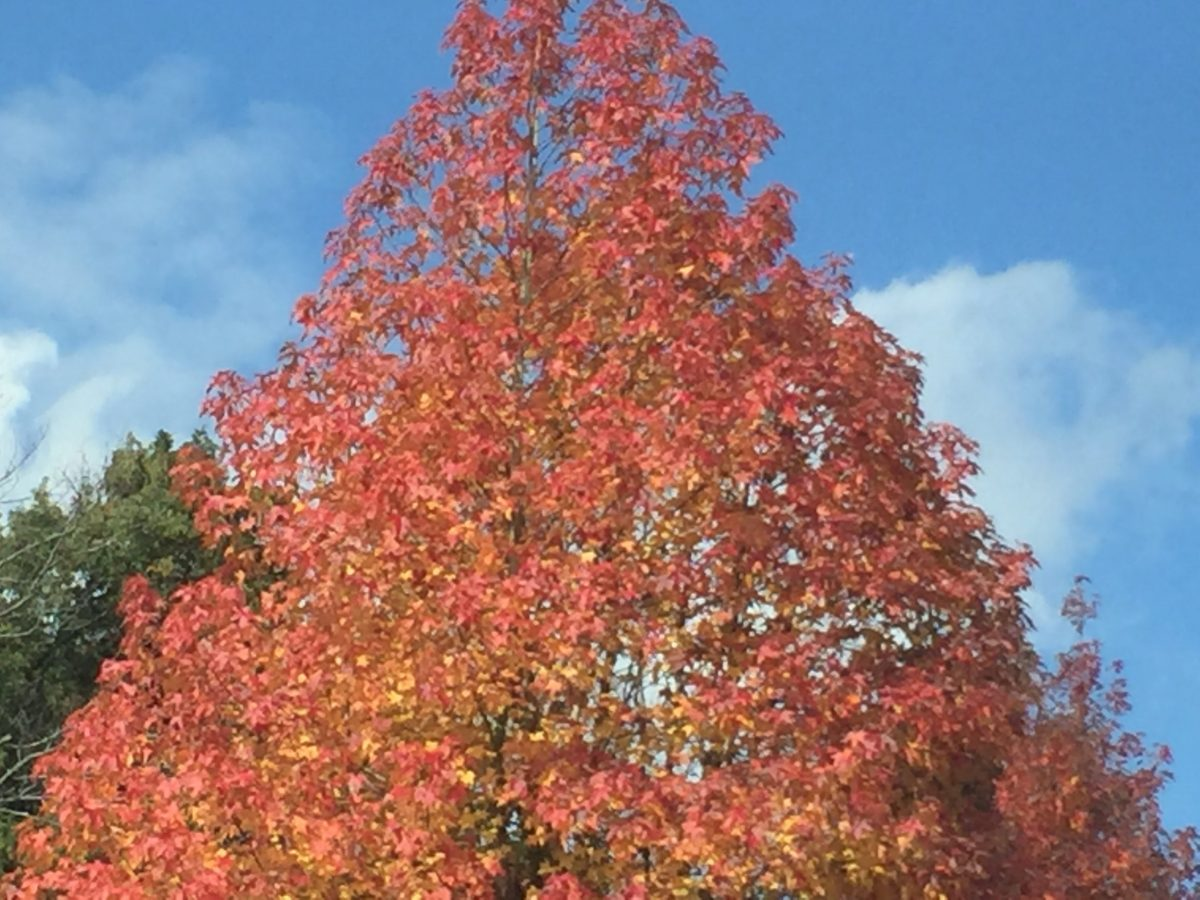 最も身近な暮らしの楽しみは、季節の変化を肌で感じることですね。